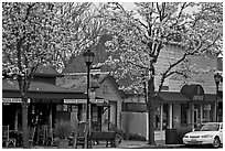 Main street in spring. Saragota,  California, USA ( black and white)