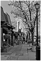Sidewalk with blossoms. Saragota,  California, USA ( black and white)