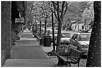 Street with blossoming trees. Saragota,  California, USA ( black and white)
