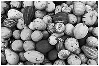 Gourds and pumpkins. Half Moon Bay, California, USA (black and white)
