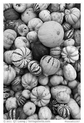 Squash, pumpkins, and gourds. Half Moon Bay, California, USA (black and white)