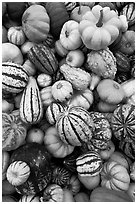 Mix of squash and gourds. Half Moon Bay, California, USA ( black and white)