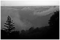 Sea of clouds at sunset above Santa Cruz Mountains. California, USA ( black and white)