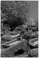 Hedges and flowers, walled garden, Filoli estate. Woodside,  California, USA ( black and white)