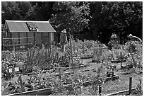 Vegetable Garden, Rancho San Antonio Open Space, Los Altos. California, USA ( black and white)