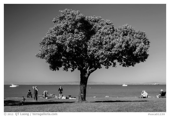 Tree and grassy shoreline, McNears Beach County Park. San Pablo Bay, California, USA (black and white)