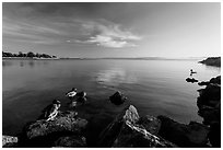 Ducks and Bay, Robert W Crown Memorial State Beach. Alameda, California, USA ( black and white)