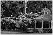 Gazebo and blossoming trees, Ardenwood historic farm regional preserve, Fremont. California, USA ( black and white)