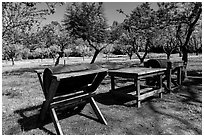 John Muir farm estate, John Muir National Historic Site. Martinez, California, USA ( black and white)