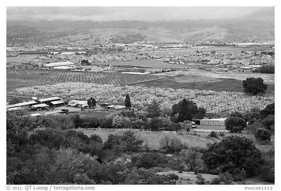 Orchards, fields, and houses from above, Morgan Hill. California, USA (black and white)