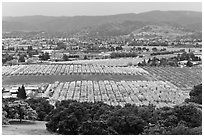 Orchards in bloom and South Valley from above, Morgan Hill. California, USA (black and white)