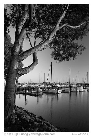 Municipal marina, Vallejo. San Pablo Bay, California, USA (black and white)