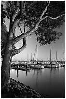 Municipal marina, Vallejo. San Pablo Bay, California, USA ( black and white)