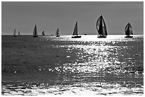 Sailboats and glimmer. Santa Cruz, California, USA ( black and white)