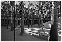Palm Courtyard, Schwab Residential Center. Stanford University, California, USA (black and white)
