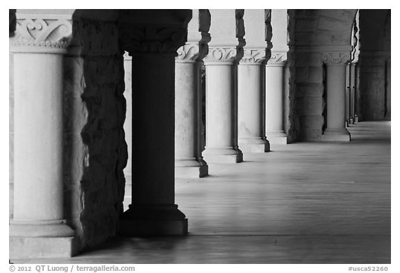 Columns in Main Quad. Stanford University, California, USA (black and white)