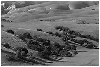 Gentle hills and trees near King City. California, USA ( black and white)