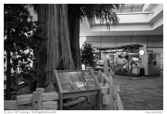 Interpretive sign, sequoias, and cafe, Fresno Yosemite Airport. California, USA (black and white)