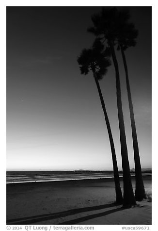 Palm trees and empty beach at sunset. Newport Beach, Orange County, California, USA (black and white)