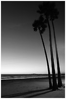 Palm trees and empty beach at sunset. Newport Beach, Orange County, California, USA ( black and white)