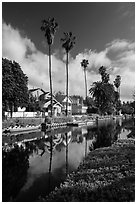 Houses, boats, and palm trees along canal. Venice, Los Angeles, California, USA ( black and white)