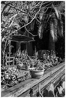 Front deck with potted plants. Venice, Los Angeles, California, USA ( black and white)