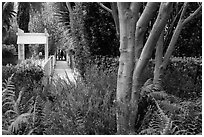 Lush vegetation surrounding residential alleys. Venice, Los Angeles, California, USA ( black and white)