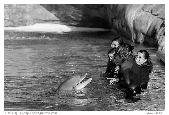 Guests interact with dolphin. SeaWorld San Diego, California, USA (black and white)