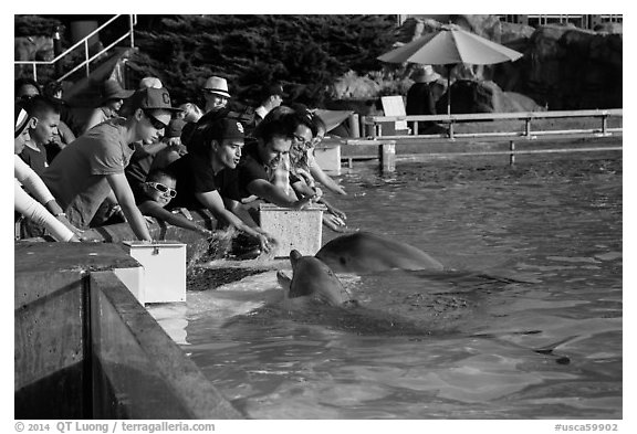 Guests petting dolphins. SeaWorld San Diego, California, USA (black and white)