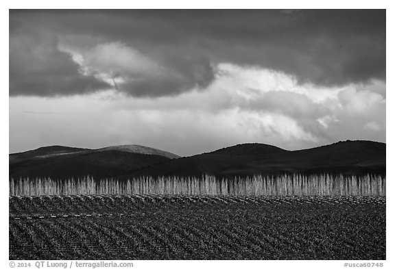 Field, bare trees, hills, and clouds. California, USA (black and white)