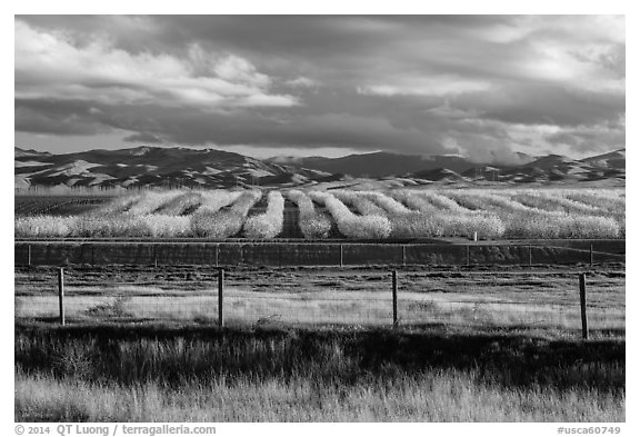 Agricultural lands in the spring. California, USA (black and white)