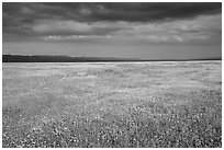 Grassland in bloom under dark sky. Carrizo Plain National Monument, California, USA ( black and white)