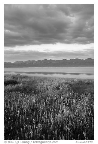 Grasses, Soda Lake with reflections of Temblor Range. Carrizo Plain National Monument, California, USA (black and white)