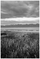 Grasses, Soda Lake with reflections of Temblor Range. Carrizo Plain National Monument, California, USA ( black and white)