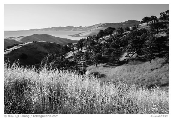 Grasses, oaks, and hills above San Luis Reservoir. California, USA (black and white)