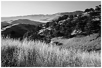 Grasses, oaks, and hills above San Luis Reservoir. California, USA ( black and white)