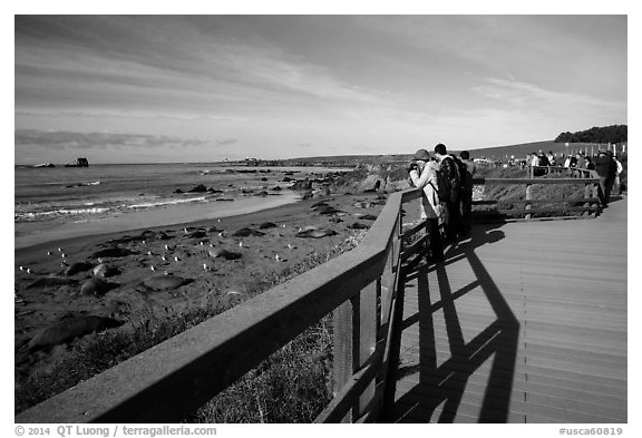 Visitors observe Piedras Blancas seal rookery from boardwalk. California, USA (black and white)