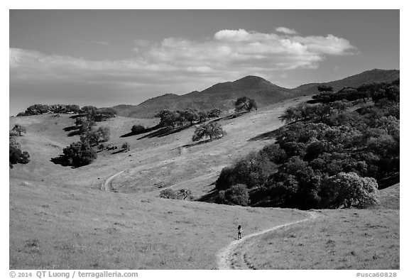 Trail winding on verdant hills, Pacheco State Park. California, USA (black and white)