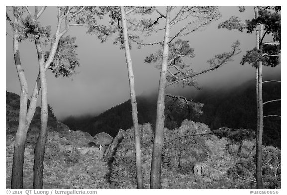 Trees in sunlight and hills in fog, Los Padres National Forest. Big Sur, California, USA (black and white)