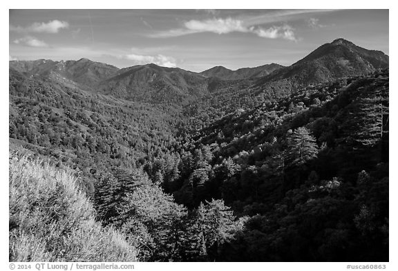 View from Bottchers Gap, Los Padres National Forest. Big Sur, California, USA (black and white)