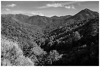 View from Bottchers Gap, Los Padres National Forest. Big Sur, California, USA ( black and white)