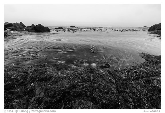 Seaweed and ocean, Jade Cove. Big Sur, California, USA (black and white)