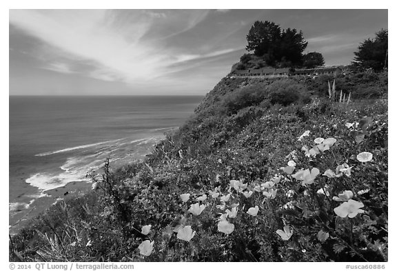 Poppies and motel rooms overlooking Pacific Ocean, Lucia. Big Sur, California, USA (black and white)