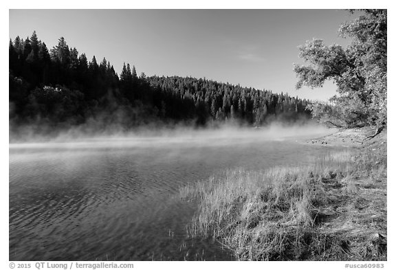 Early morning fog raising from Jenkinson Lake. California, USA (black and white)