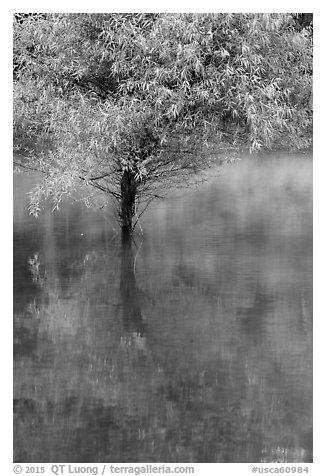 Tree rising out of water, Jenkinson Lake, Pollock Pines. California, USA (black and white)
