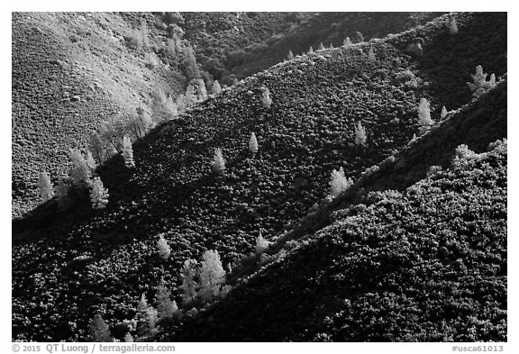 Hills and trees, Merced River Canyon. California, USA (black and white)