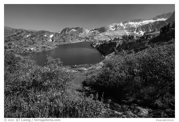 Wildflowers, stream, and lake, Twenty Lakes Basin, Inyo National Forest. California, USA (black and white)
