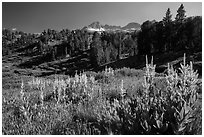 Meadows, trees, and Sierra Nevada crest, Twenty Lakes Basin. California, USA ( black and white)
