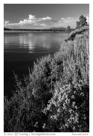Prosser Reservoir, Tahoe National Forest. California, USA (black and white)