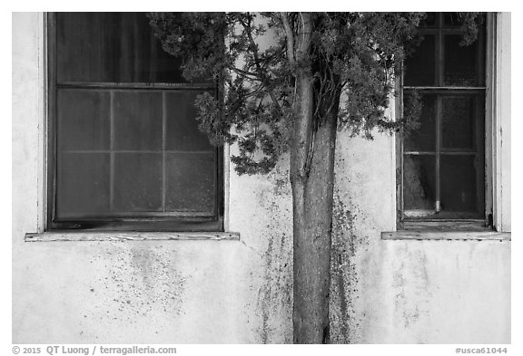 Old windows and tree, La Paz, Cesar Chavez National Monument, Keene. California, USA (black and white)